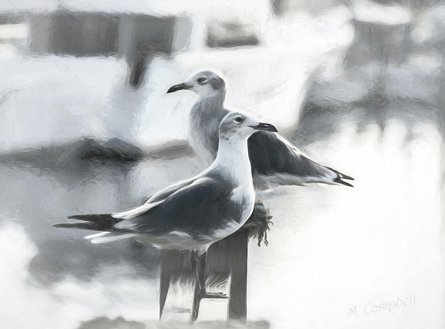 Sketchy Gulls by Michael Campbell