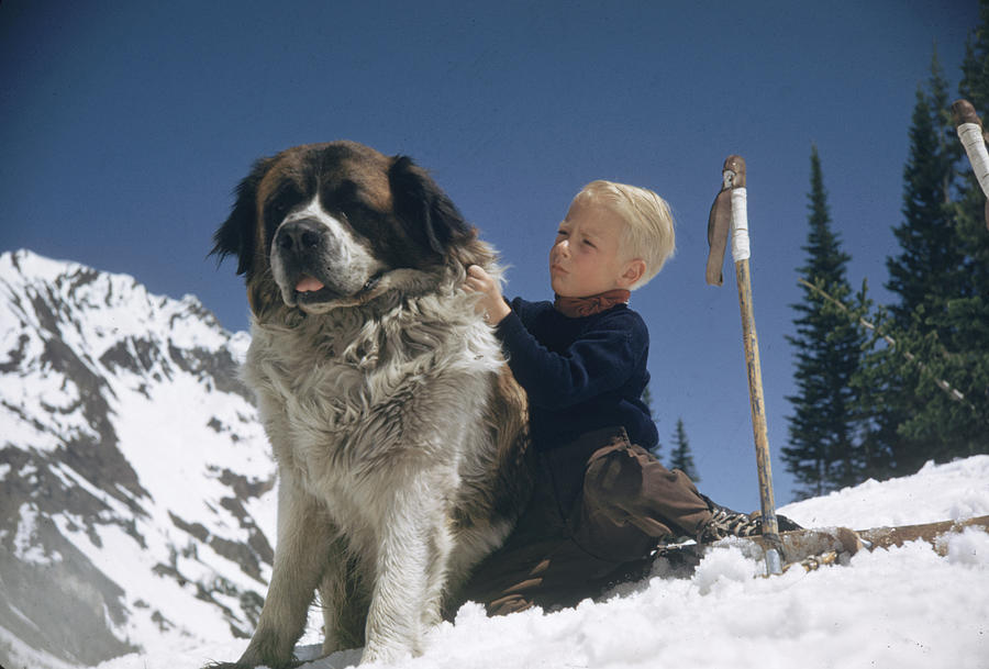 Skiing With A St Bernard Photograph by George Silk