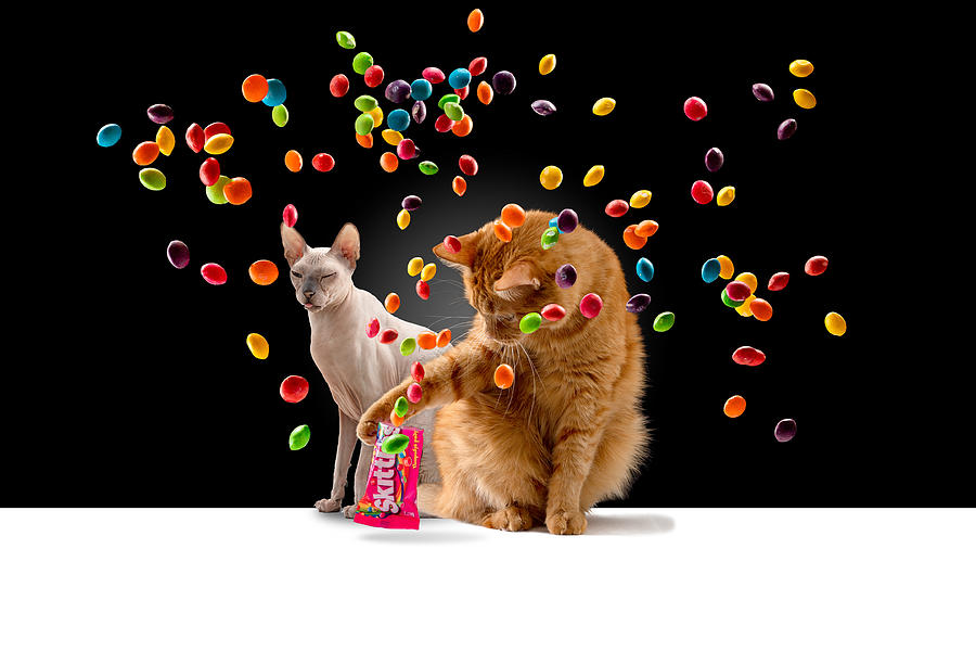 Cats Photograph - Skittles Time by Kotturstudio
