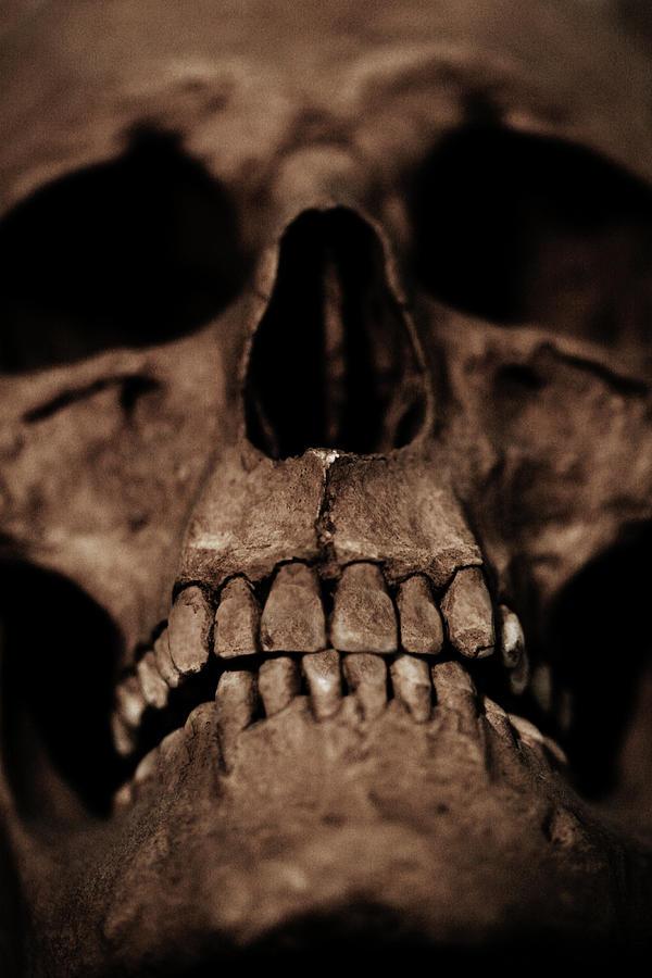 Skull Digital Art - Skull close up by Cambion Art