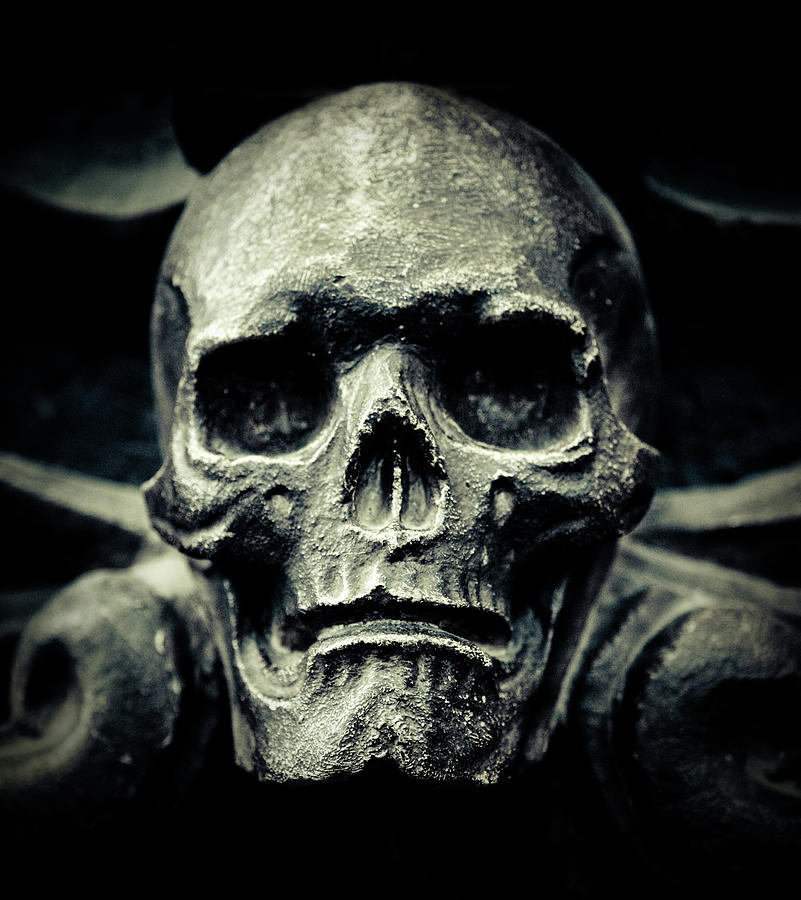 Skull Photograph by Thepalmer