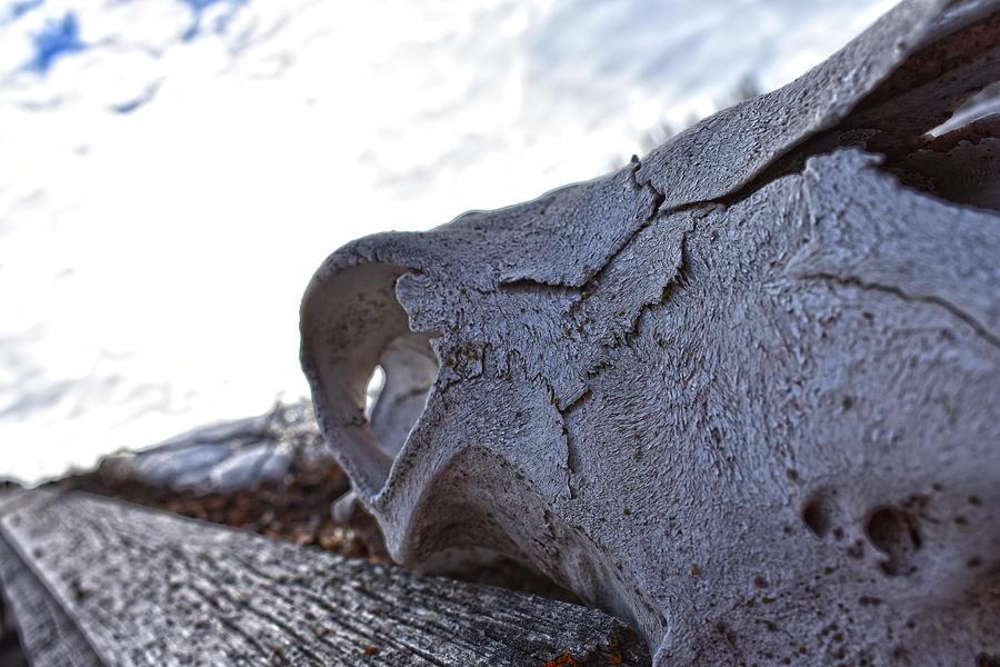 Skulls of the past by Jason Bohannon