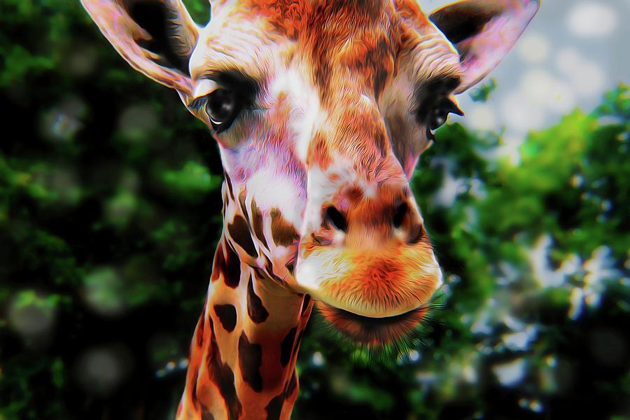 Sky High Giraffe  by Christina M Hale