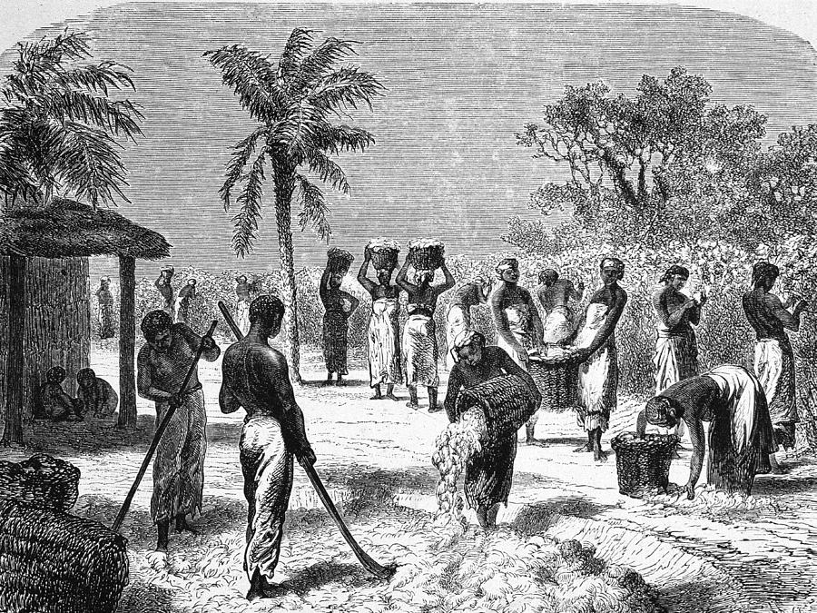 Slaves On The Plantation Photograph by Hulton Archive