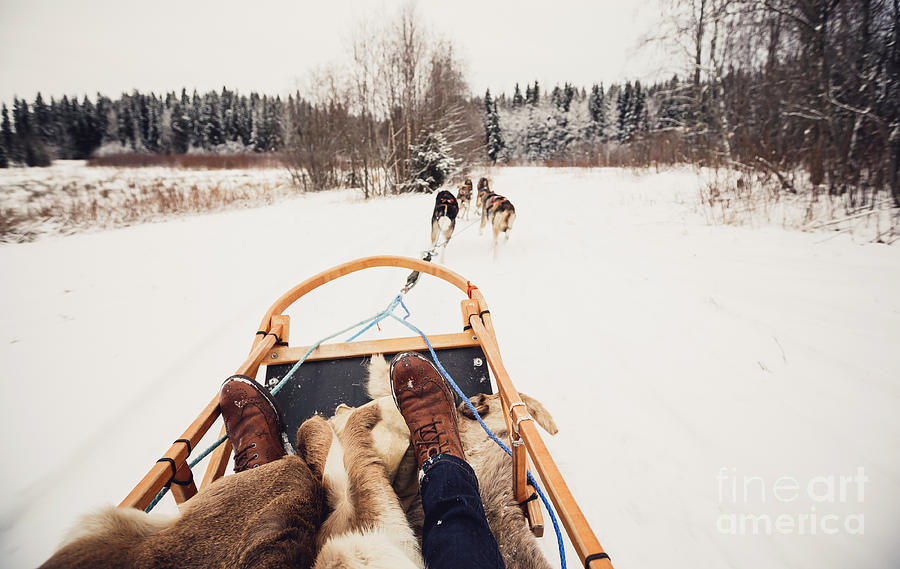 Sleigh Photograph - Sled Dogs Pulling A Sled Through The by Andrey Bayda