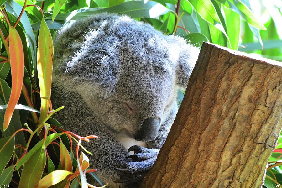 Sleeping Koala by Lisa Wooten