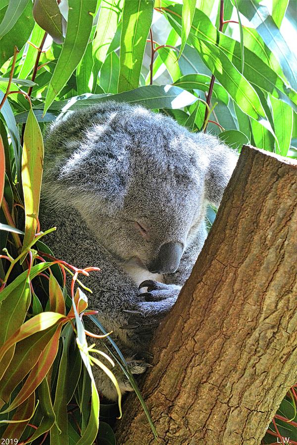 Sleeping Koala Vertical by Lisa Wooten