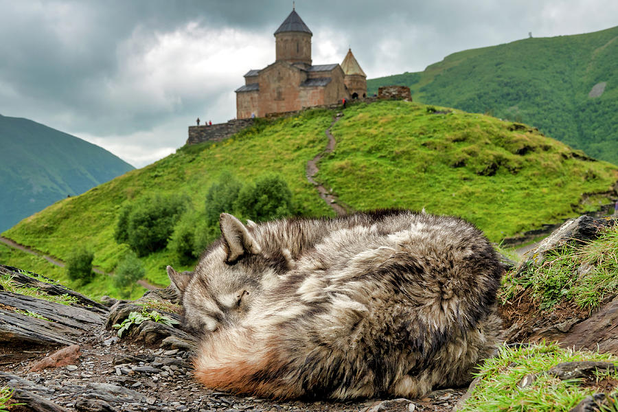 Sleeping near the Gergeti Trinity Church by Fabrizio Troiani