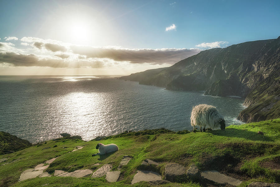 Slieve League view with sheep by Roelof Nijholt