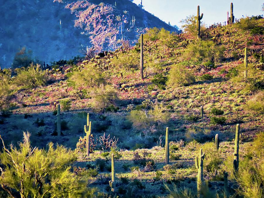 Slope of the Saguaros by Judy Kennedy