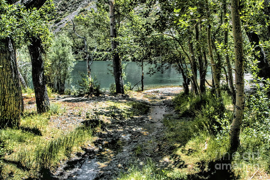 Small Creek  by Joe Lach