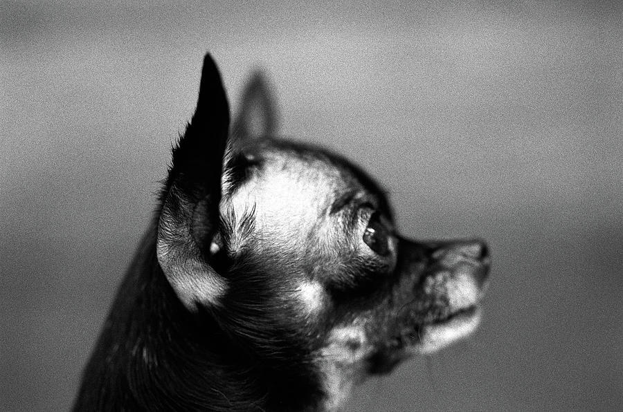 Small Dog, Profile Photograph by Henry Horenstein