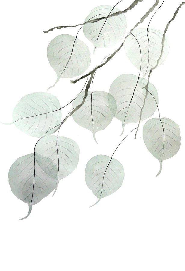 Small Leaved Lime Trees Tilia cordata leaf by Color Color