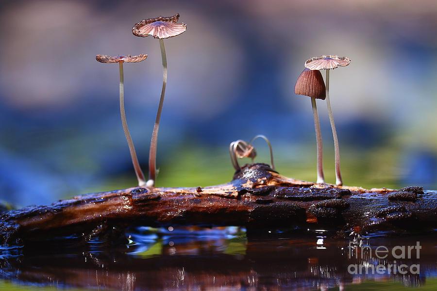 Magic Photograph - Small Mushrooms Toadstools Macro by Kichigin