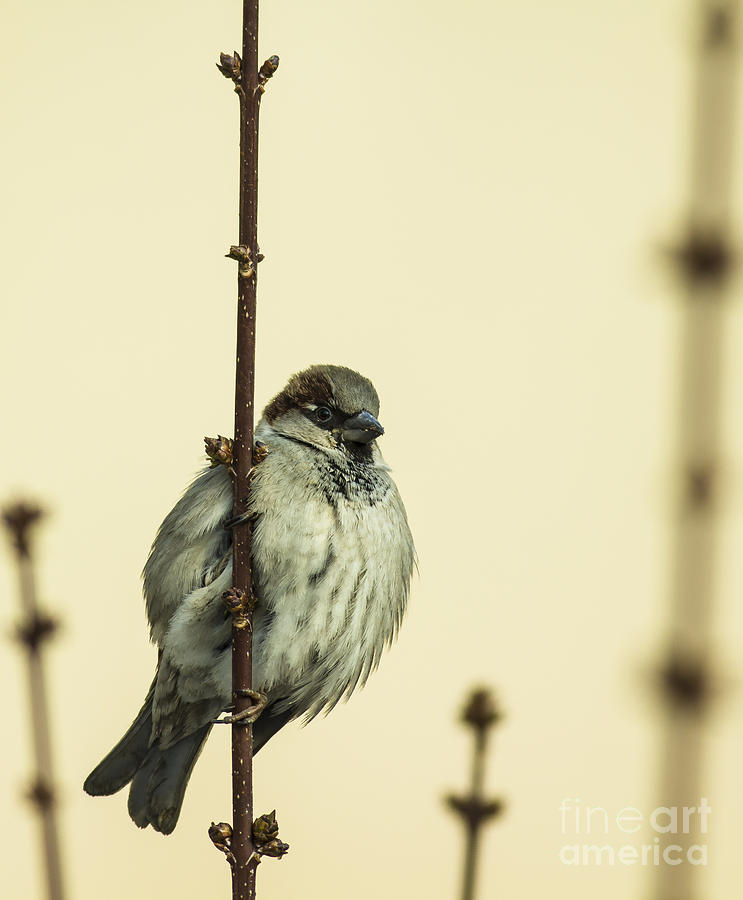 Small Photograph - Small Passerine Bird Sitting On The by Martin Janca