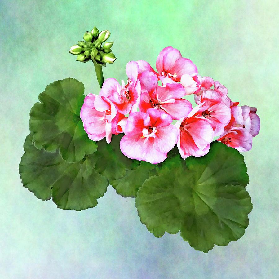 Small  Pink Geranium by Susan Savad