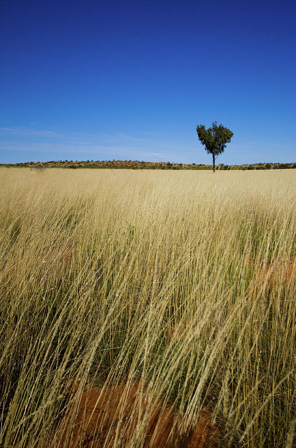 Small Single Tree In Field Photograph by Universal Stopping Point Photography