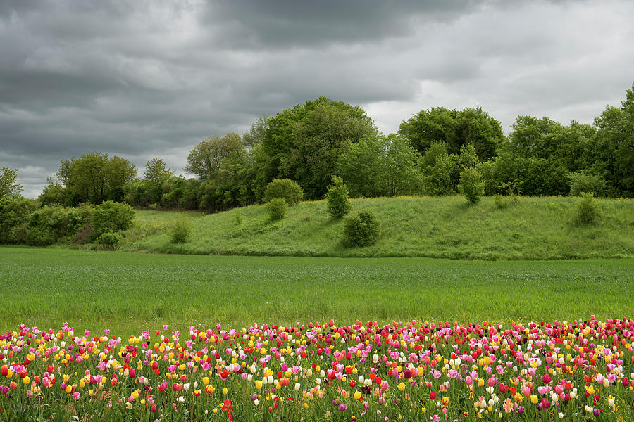 Small Tulip Field And Storm Clouds Photograph by Thomas Winz