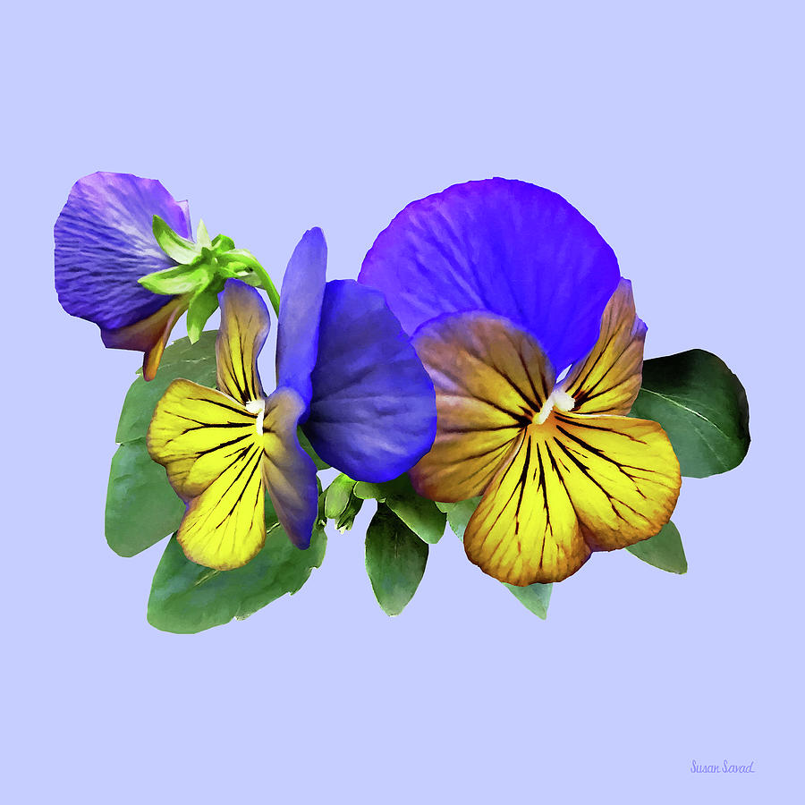 Small Yellow and Purple Pansies by Susan Savad