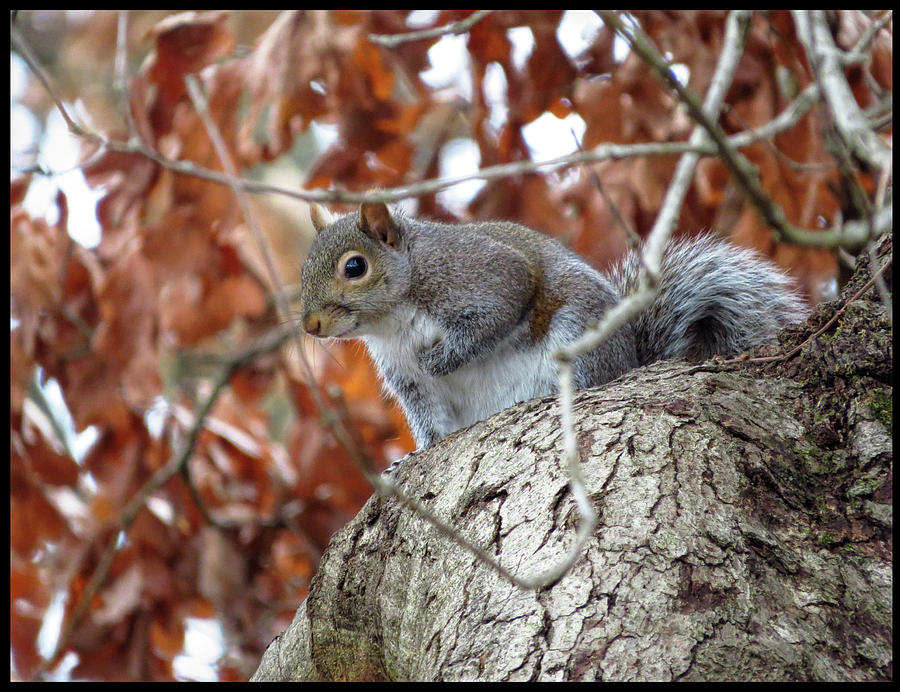 Smiling Squirrel by Denise Beverly