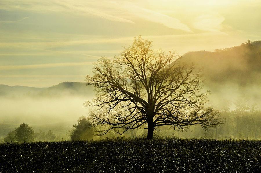Smokey Mountain Misty Tree DSC_0396 by Michael Thomas