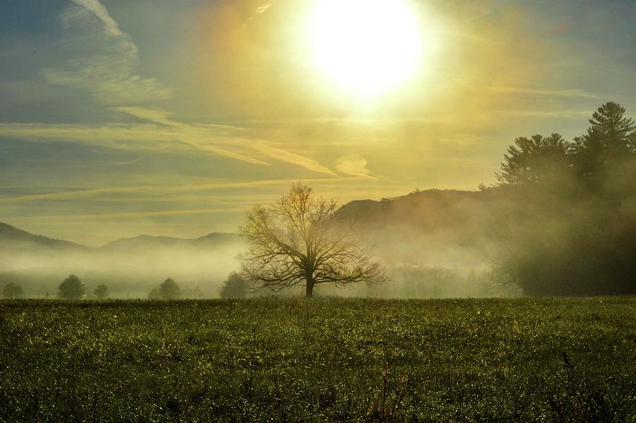 Smokey Mountain Misty Tree in the Field DSC_0390 by Michael Thomas