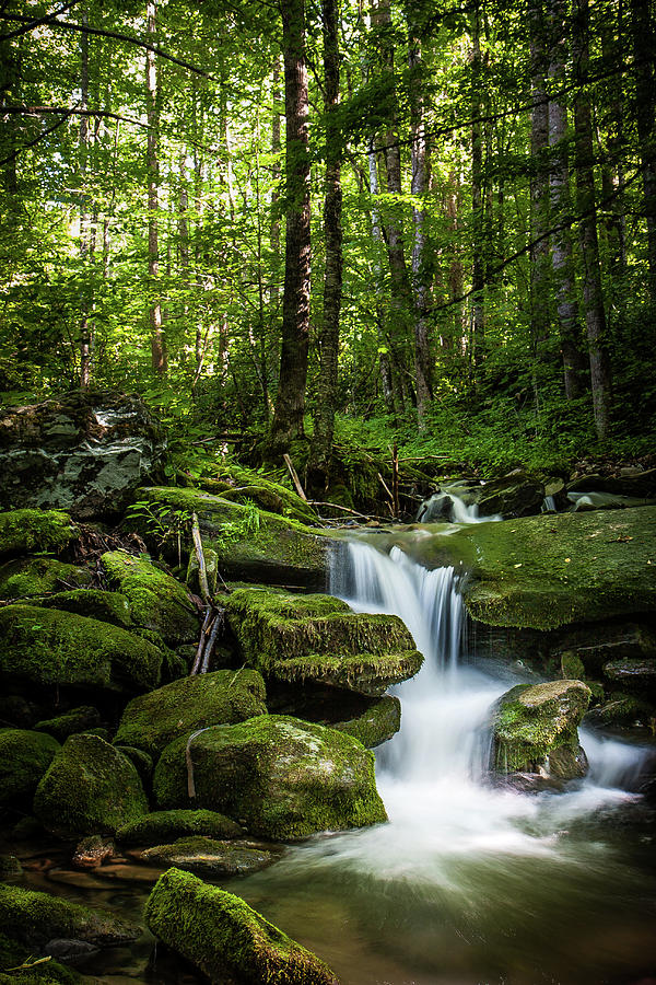 Smokey Mountain Serenity by Randall Allen