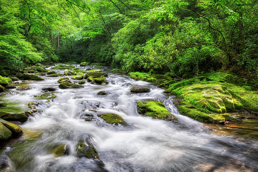 Smokey Mountain Stream by Randall Allen