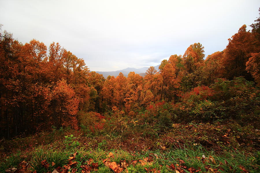 Smokies in Autumn by Kevin Wheeler