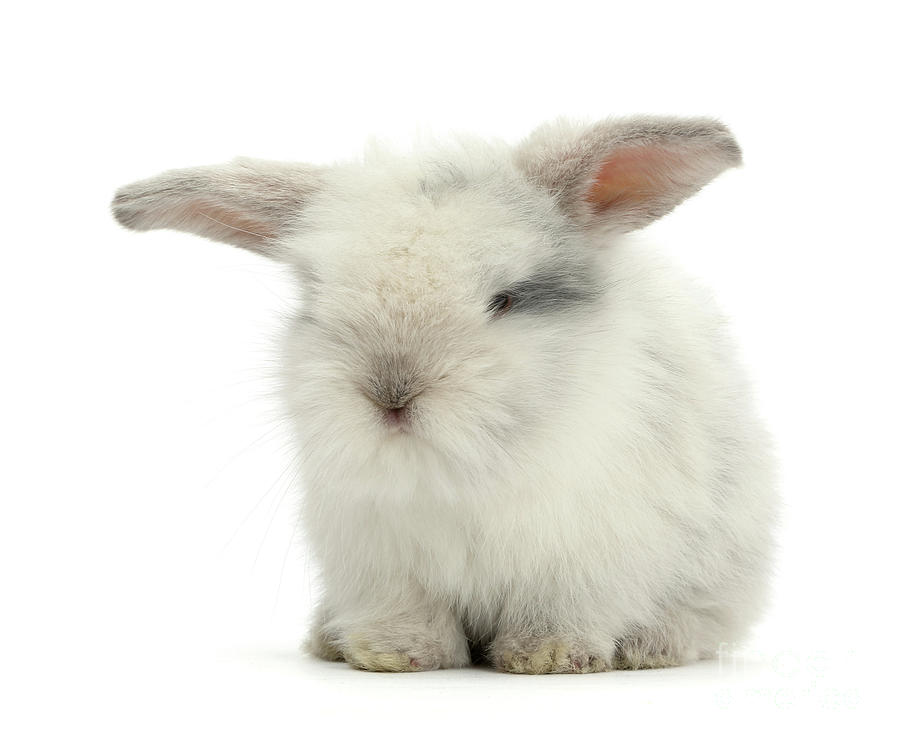 Smoky Love Bunny by Warren Photographic