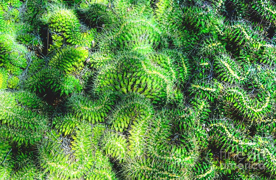 Snake Cactus Photograph by Mae Wertz