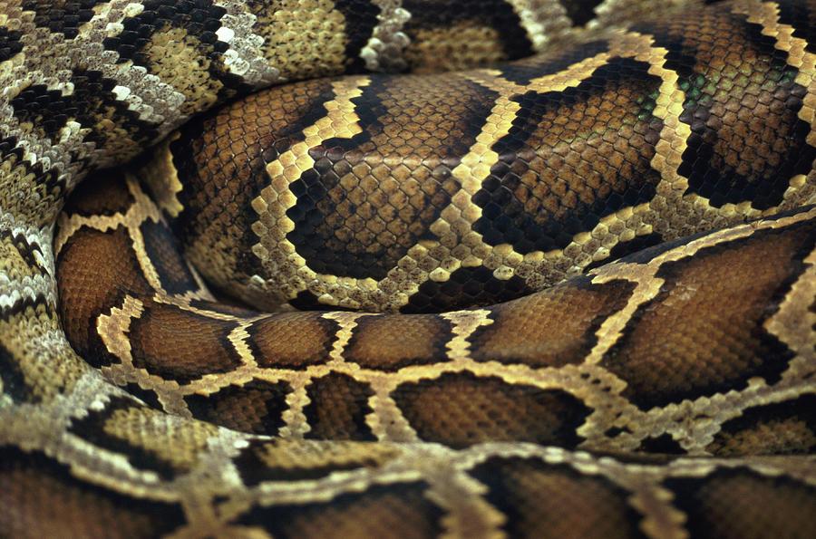 Snake Photograph by John Foxx