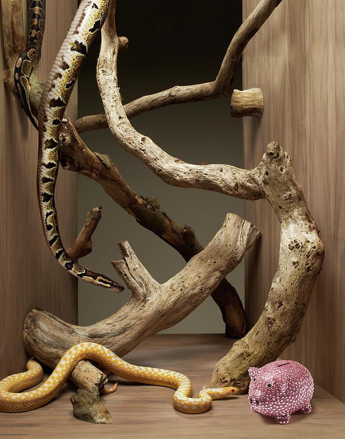 Snakes Going Toward A Piggy Bank Photograph by Michael Blann