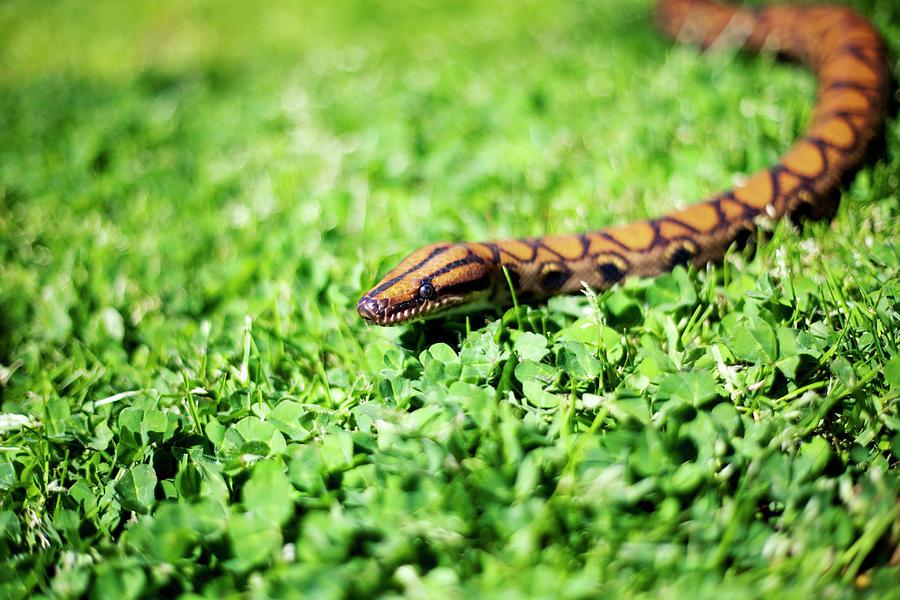 Snakey Photograph by By John Carleton