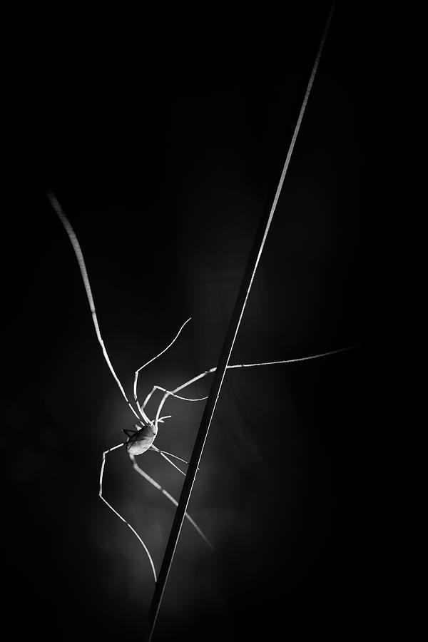 Spider Photograph - ...snatcher Of Light... by Pali Gerec