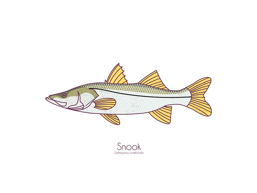 Snook by Kevin Putman