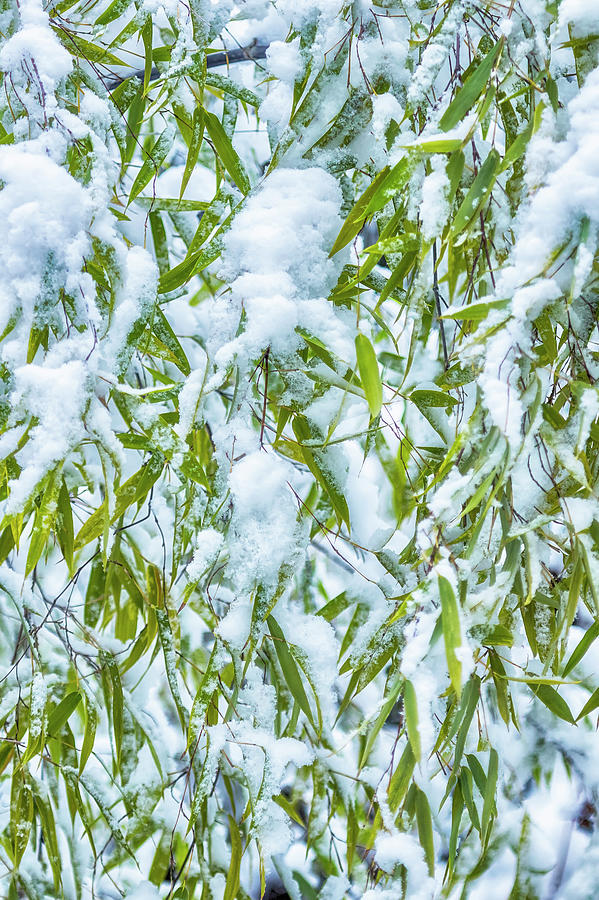 Snow and Leaves - Nature Abstract by Belinda Greb