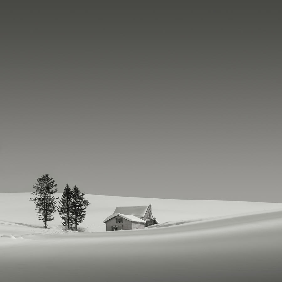 Snow and Trees IX by Francis Ansing