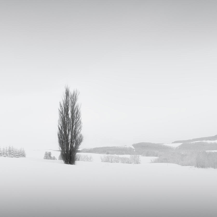 Snow and Trees V by Francis Ansing