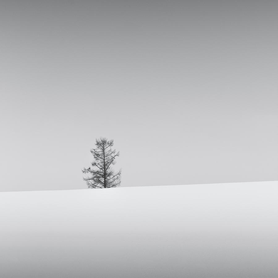 Snow and Trees VII by Francis Ansing