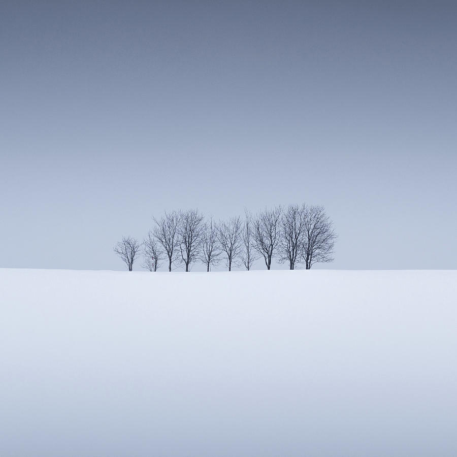 Snow and Trees VIII by Francis Ansing