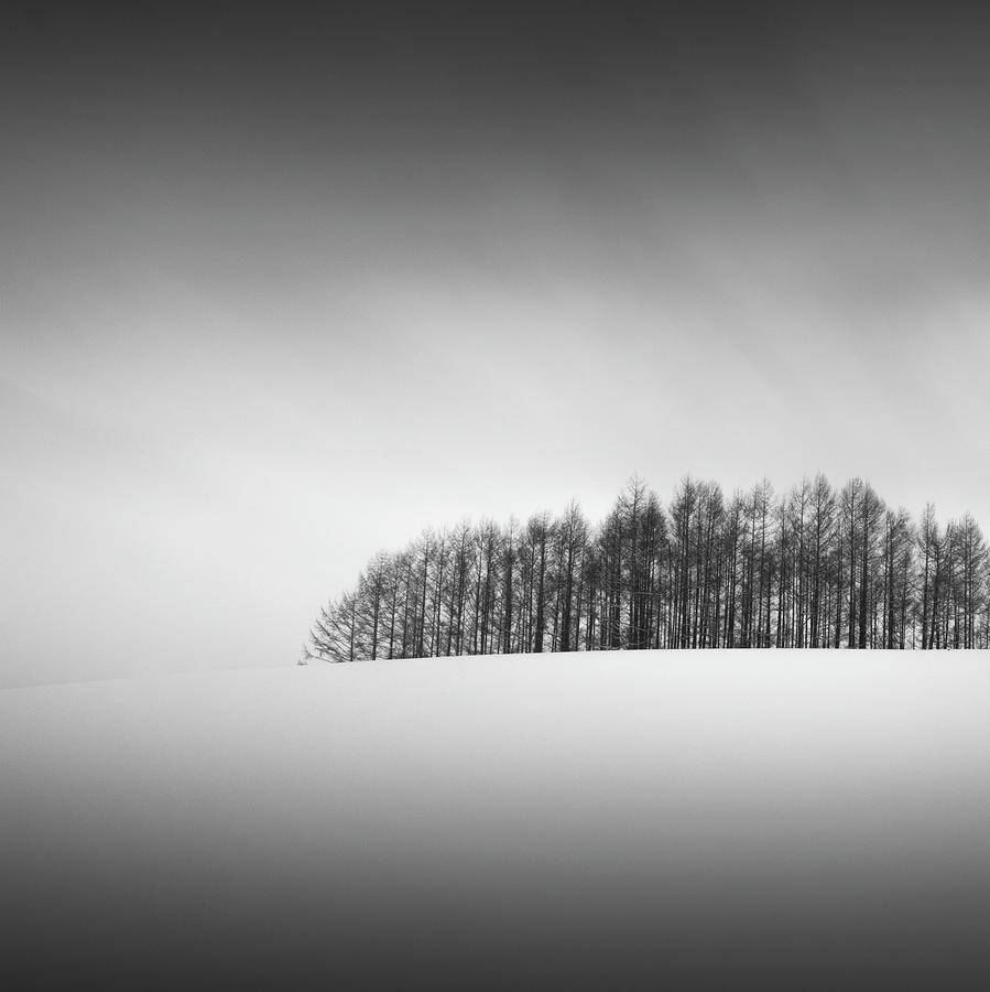 Snow and Trees X by Francis Ansing
