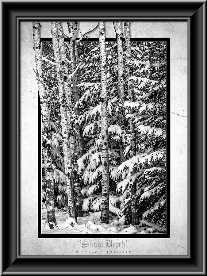 Snow Birch BW by Rick Bartrand