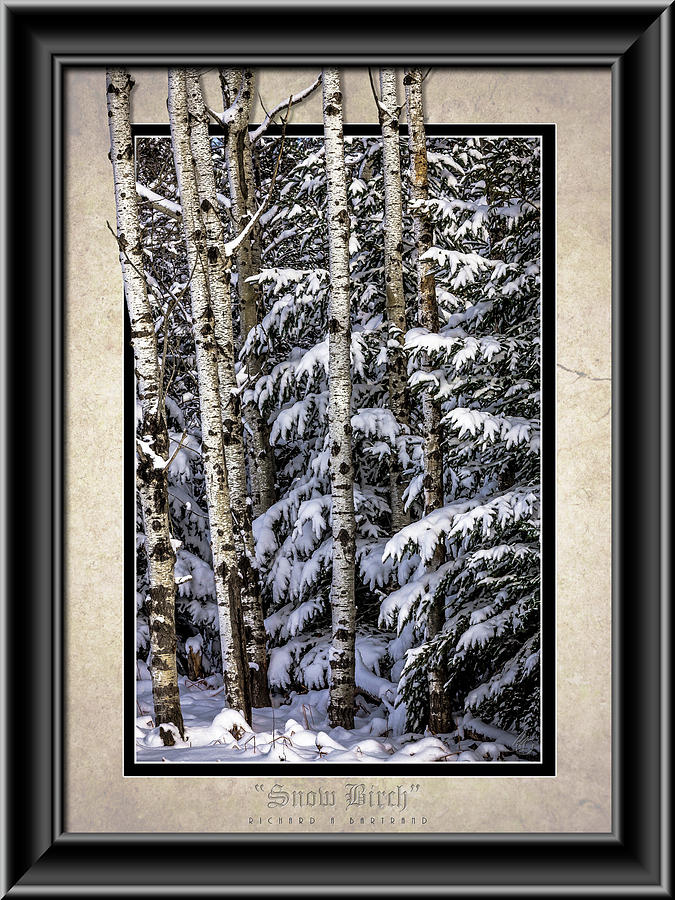 Snow Birch Color by Rick Bartrand