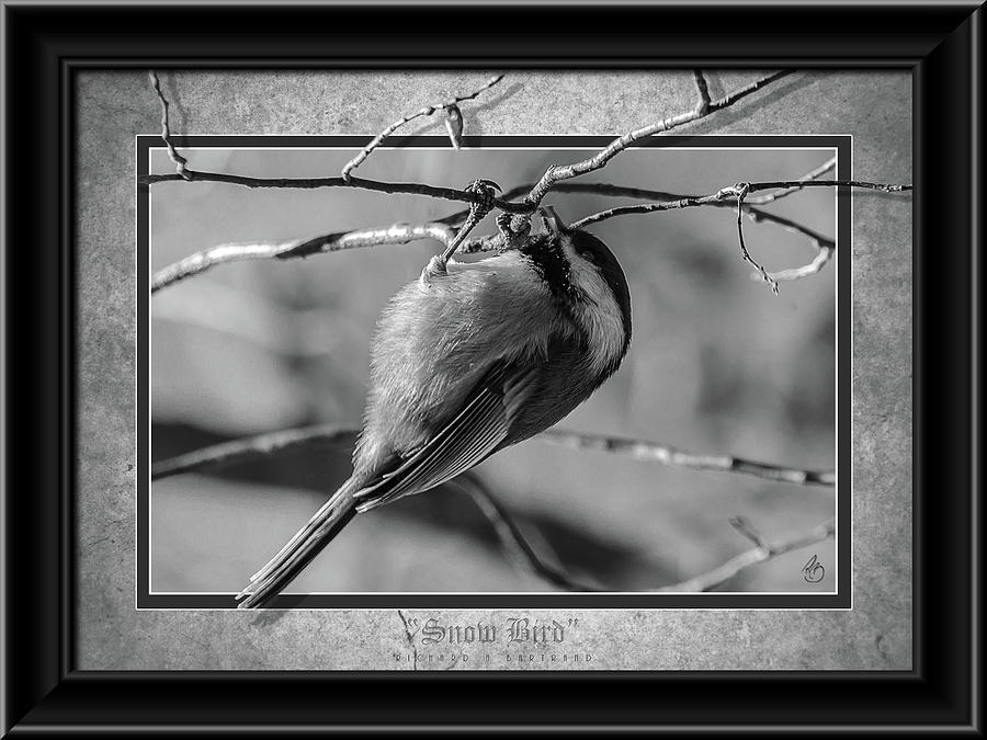 Snow Bird BW by Rick Bartrand