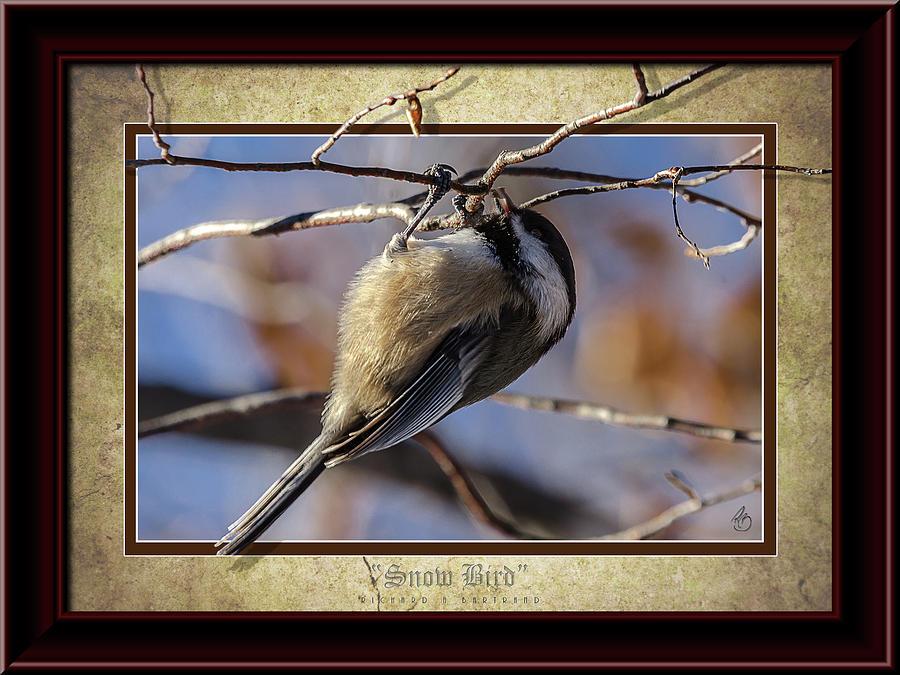 Snow Bird Color by Rick Bartrand
