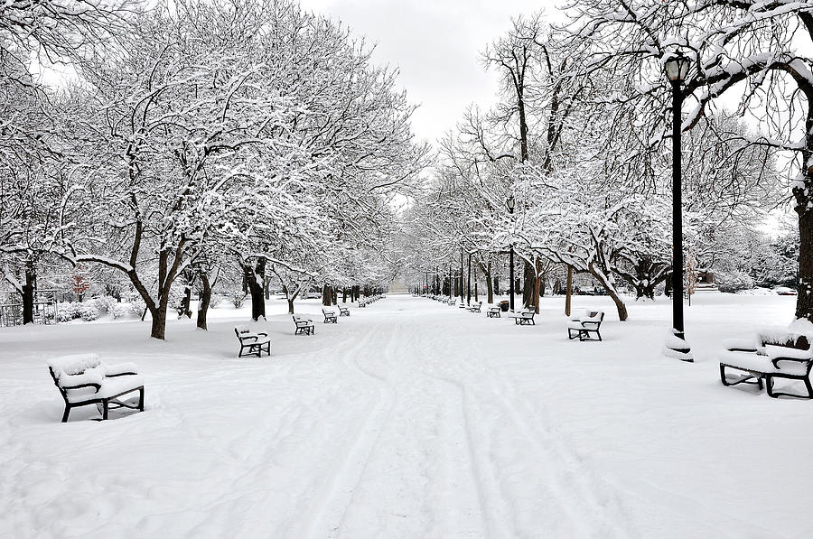 Snow Covered Benches And Trees In Photograph by Shobeir Ansari