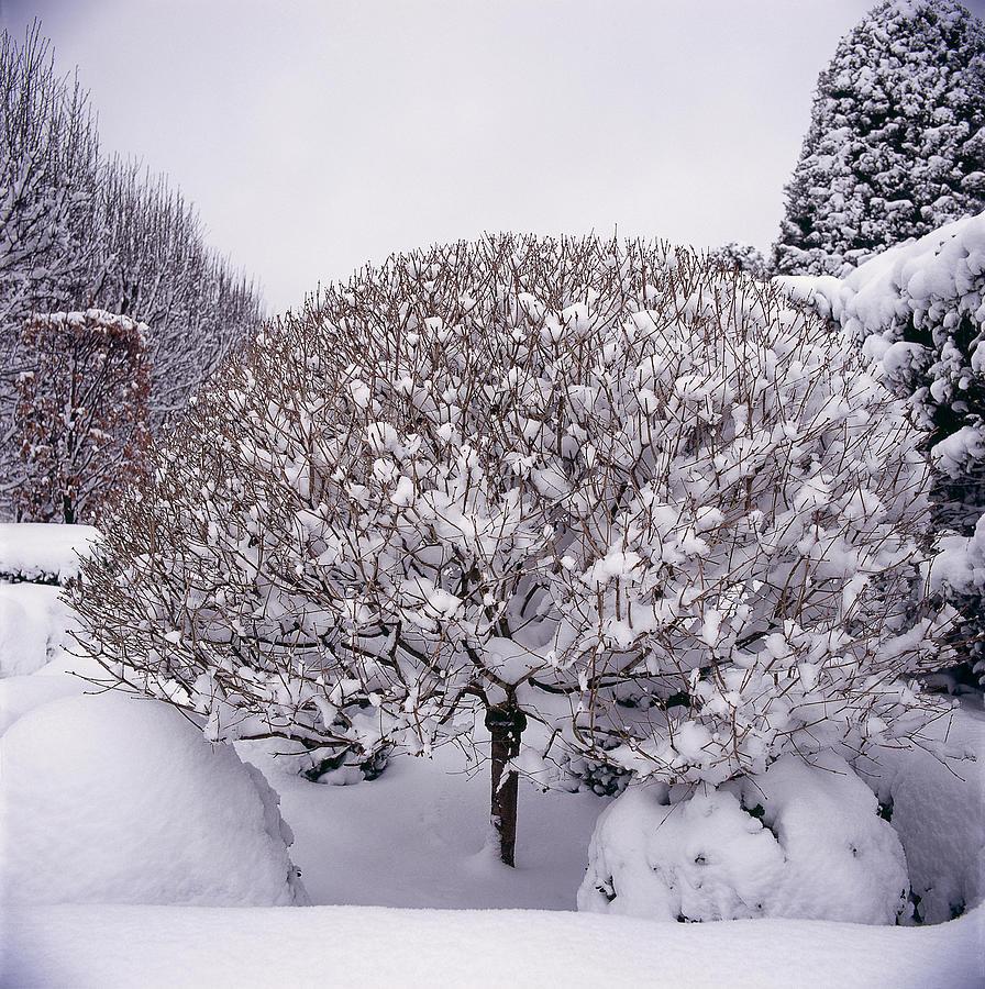 Snow Covered Garden Photograph by Richard Felber