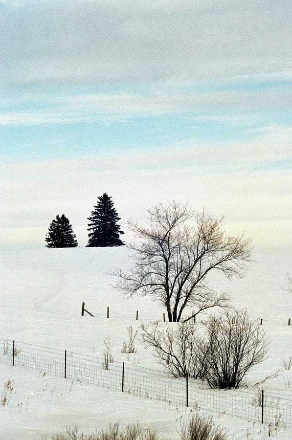Snow Covered Landscape, Yellowstone Photograph by Medioimages/photodisc