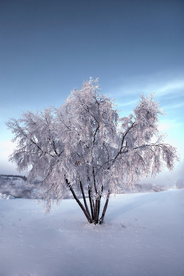Snow Covered Tree In The Yukon River by Jonathan Tucker